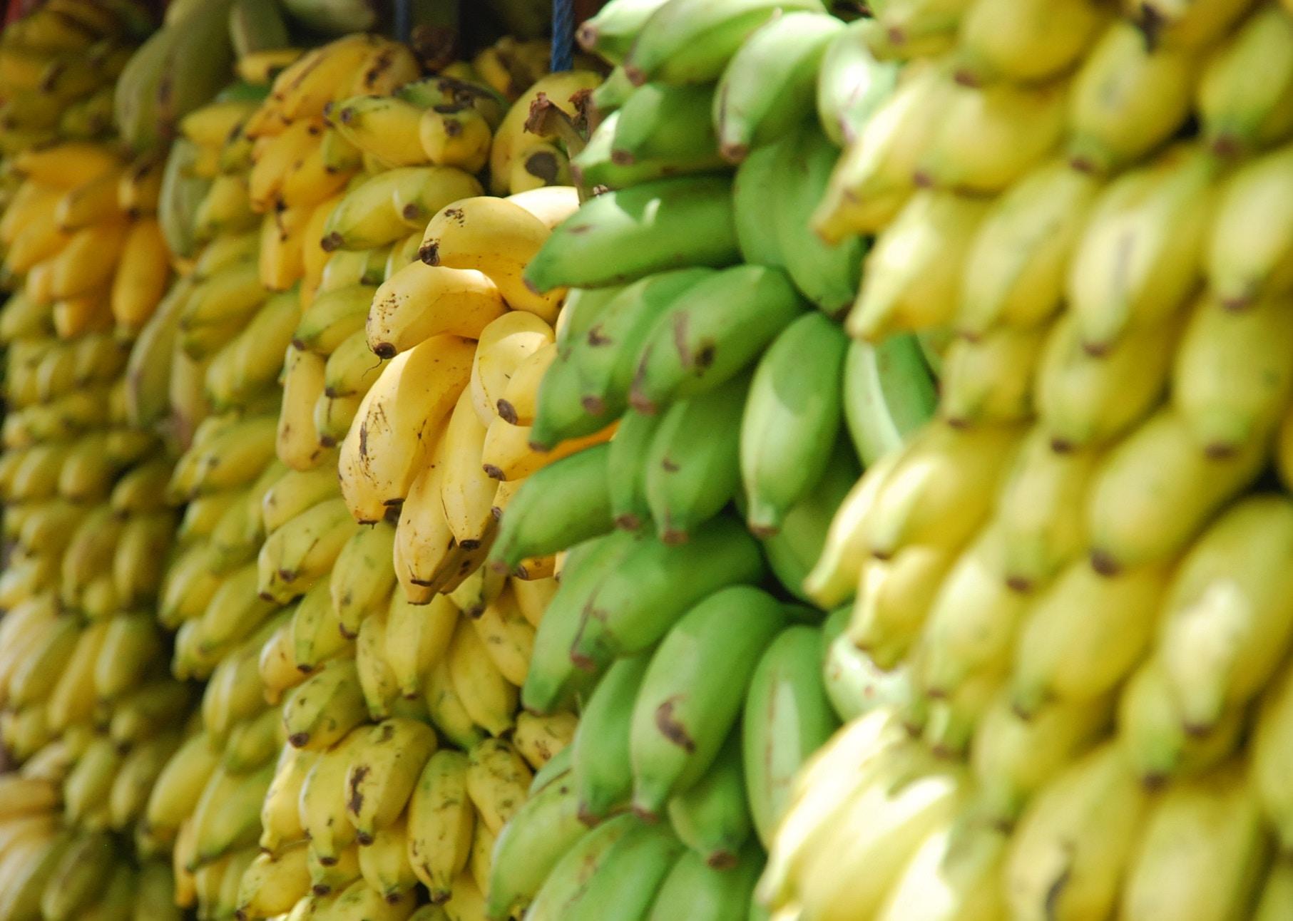 El viaje de los plátanos