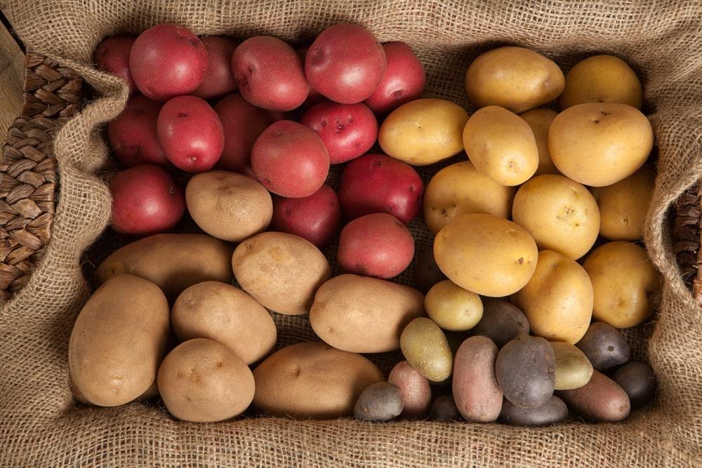 Guía definitiva de las patatas: variedades y usos